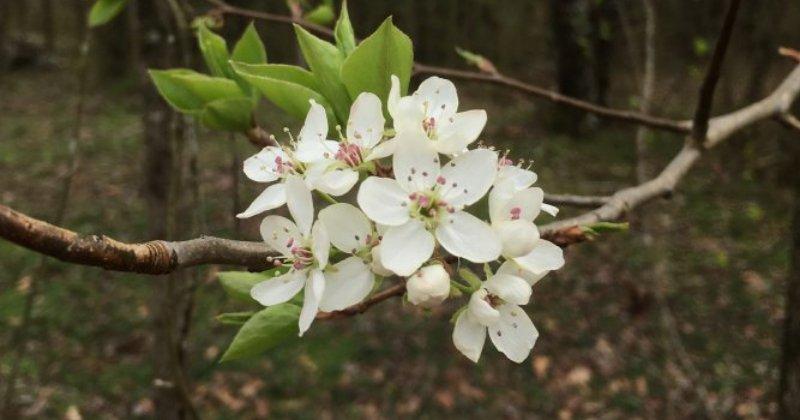 POW: Trees in Bloom from Artichoke Lover