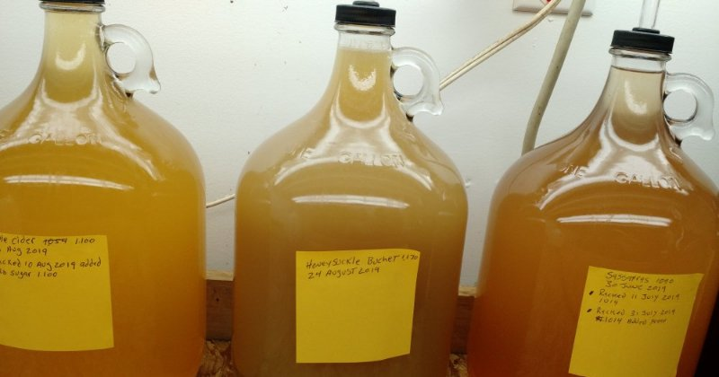How To Make Honeysuckle Mead