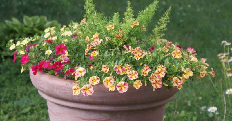 POW: Beautiful Flowers from Carol Dee